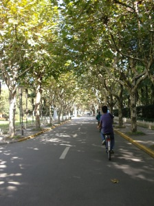 Fudan's tree-lined streets